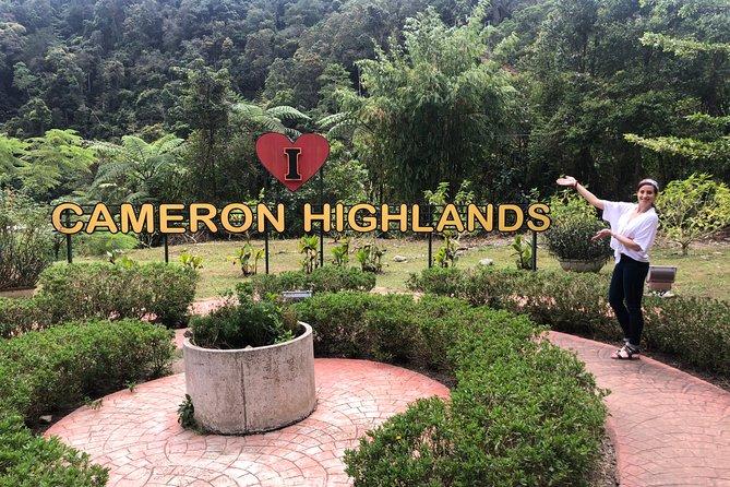 2 Days Cameron Highlands, Batu Caves & Kuala Selangor Fireflies Tour