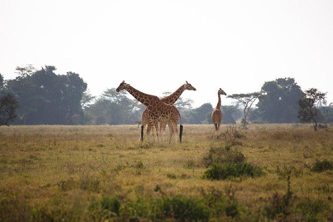 7 Days - Masai Mara, Nakuru, Naivasha, & Amboseli - Midrange - Safari Van