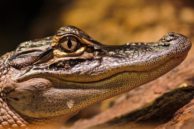 Safari in Selous Game Reserve: 03 Night 04 Days Safari – Full Board