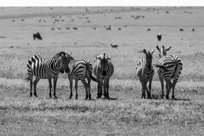 5 Days - Masai Mara, Nakuru and Naivasha - Luxury - Safari Van