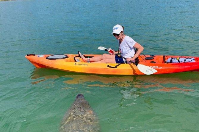 Guided Mangrove Tunnel Kayak Tour
