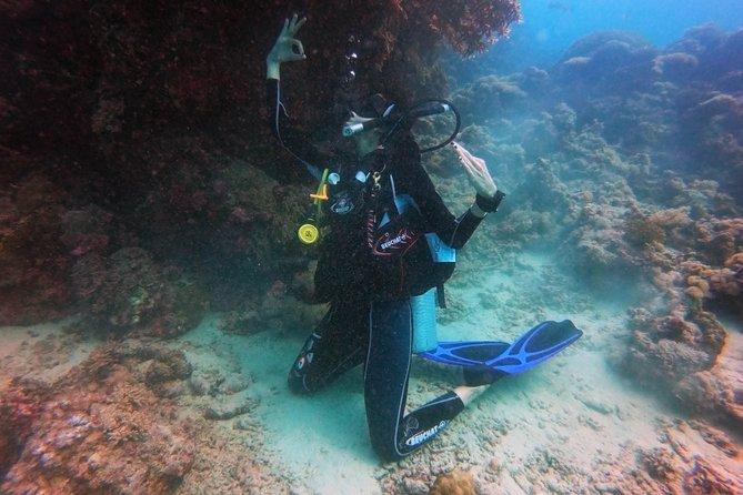Diving Boat Trip