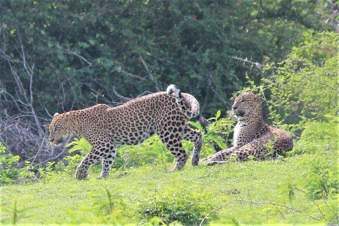 Yala National Park Jeep Safari - One Day Trip