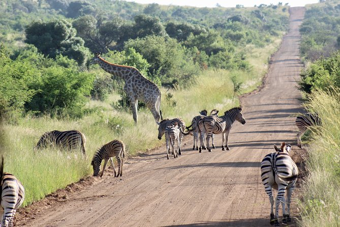 Private Guided Safari Tour of Pilanesberg National Park