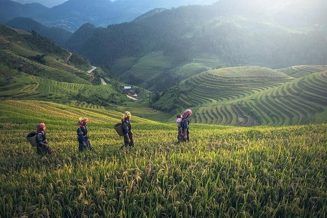 Full-Day Private Tour of Longji Rice Terraces from Guilin