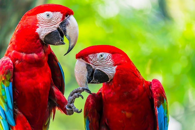 Costa Rican Wildlife Introduction. A Visit to the Zoo. Private Tour