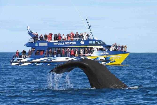 Whales & Dolphins Watching Tour