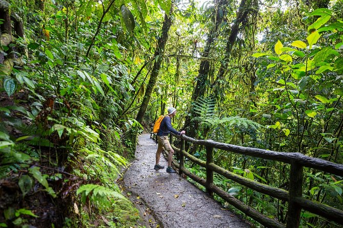 3 in 1 Eco Tour Rain Forest Aerial Tram, River Cruise & Nature Walk Private Tour
