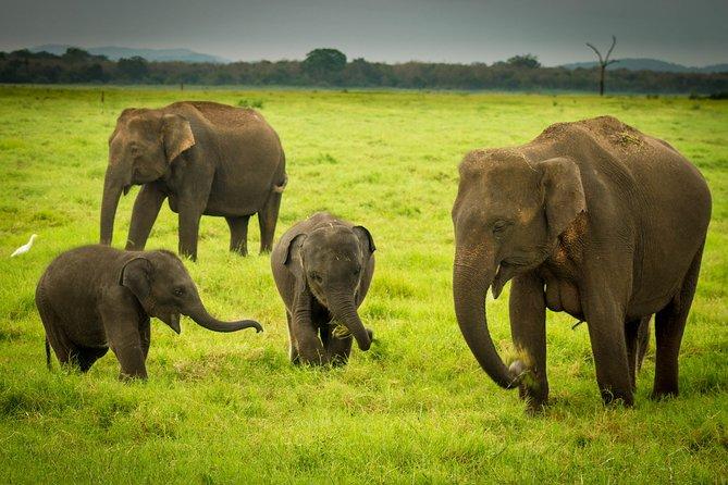 Udawalawa National Park Safari Day Tour
