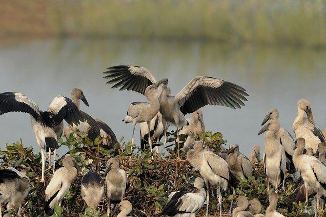 Same day excursion Chennai to Pulicat Lake Bird Sanctuary & Nellore