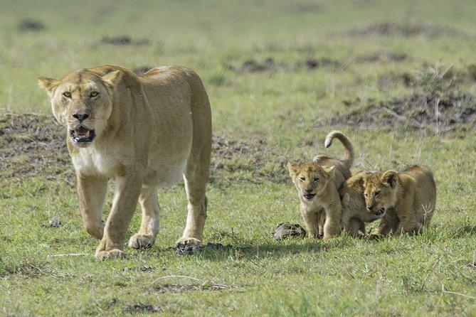 From Nairobi: Half Day Tour to Nairobi National Park