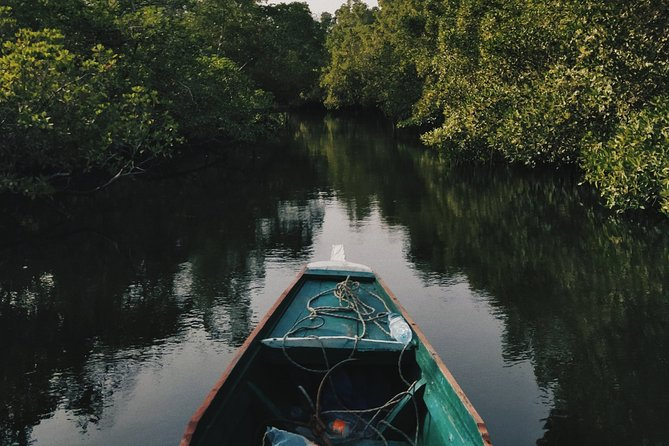 Mangrove Cruise in Cherating