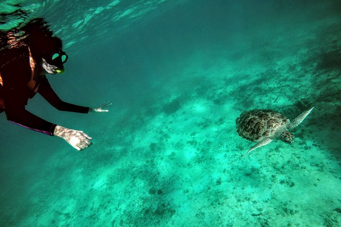 Private Cenote & Snorkeling Tour with Turtles in Akumal