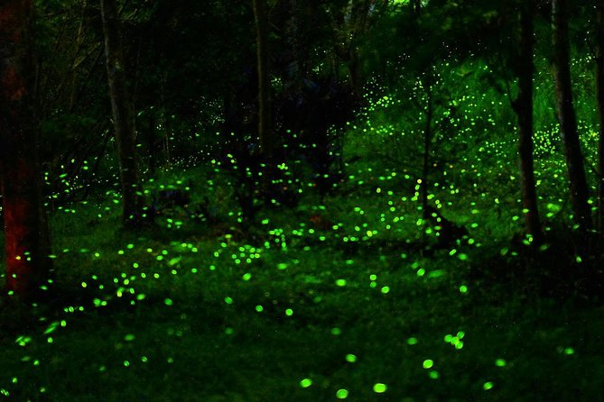 Sanctuary of the fireflies