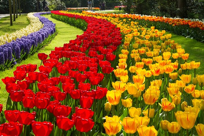 Keukenhof 2021 Private Floral Tour (20th March - 9th May 2021)