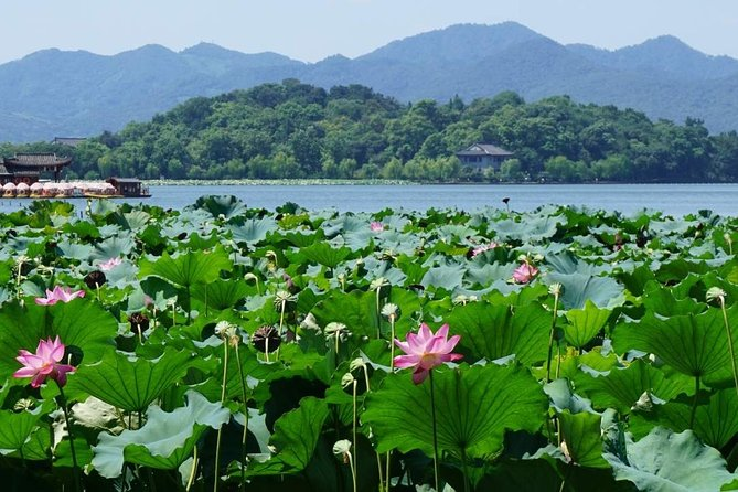 Classic Hangzhou Day Tour (West Lake, Lingyin Temple, Dragon Well Tea Village)