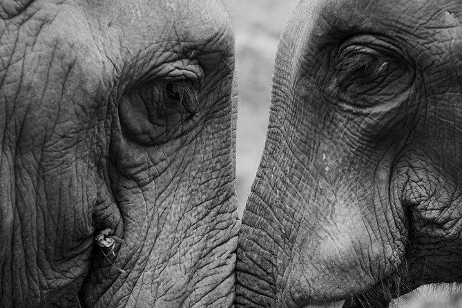 The best of Africa Safari