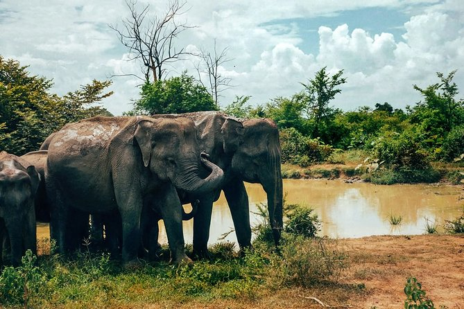 Afternoon Jeep Safari in Udawalawe National Park - Excursion from Mirissa