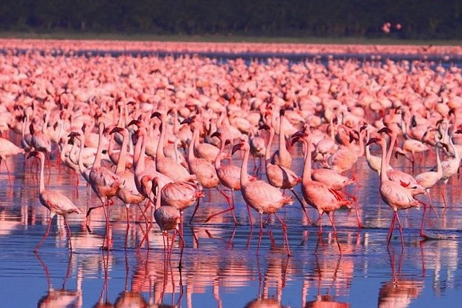 Full-Day Lake Nakuru National Park from Nairobi photo 4