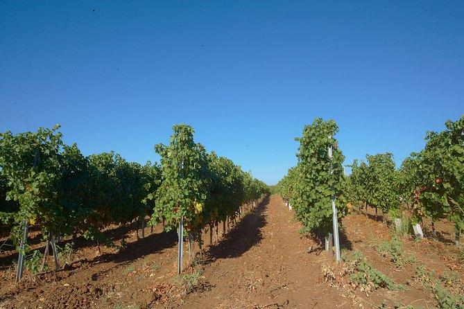 Wine Safari in Edoardo Miroglio Winery