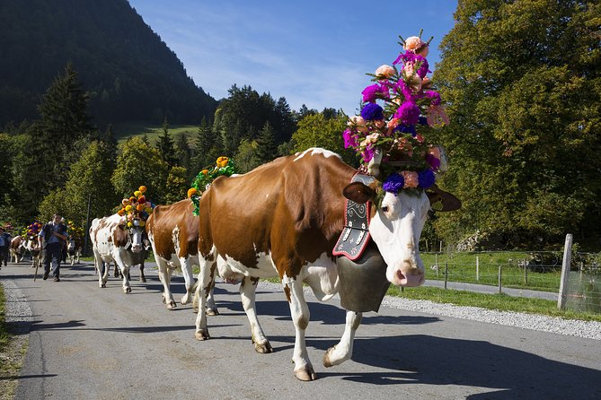 Berne the Capital and Cheese paradise Emmental (Private Tour)