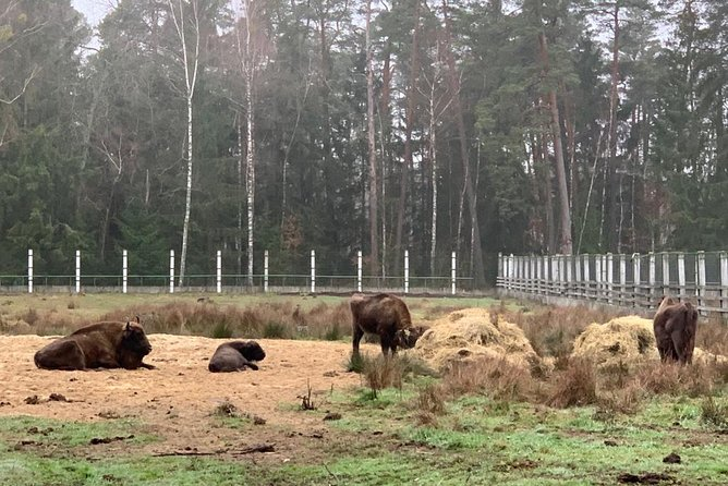 Bison enclosures