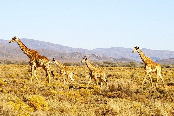 4 Day Cape Town Essential Tours & Overnight Big 5 Safari At Inverdoorn