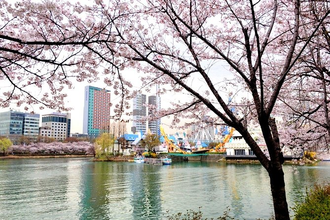 Private Cherry Blossom Tour (only APR) from Seoul with Yeouido and Seokchon lake
