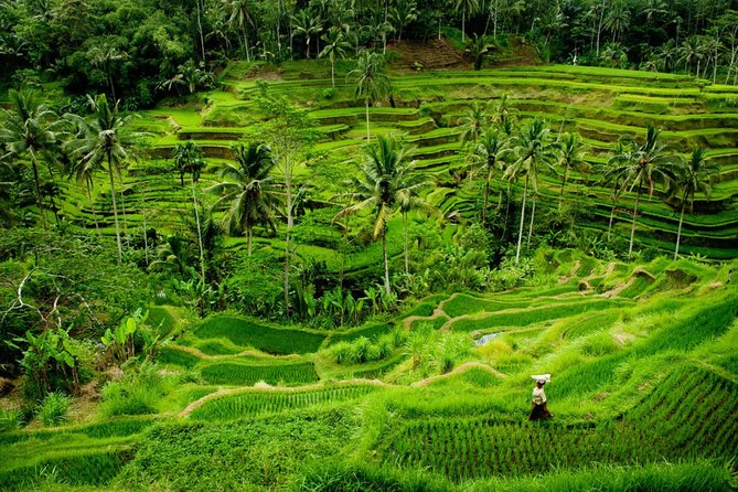 Private All Inclusive Tour : The Best of Ubud Attraction