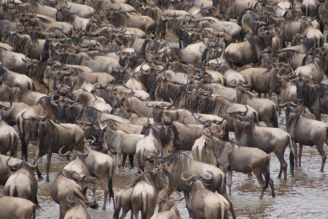7 Day Serengeti Wildebeest Migration Safari