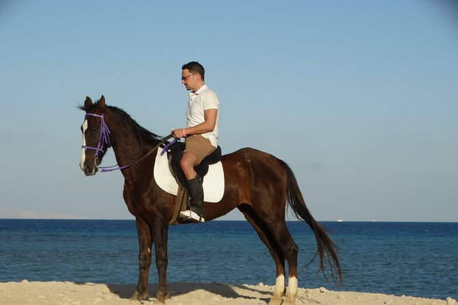 One hour Horse Riding At Amazing Desert - Hurghada