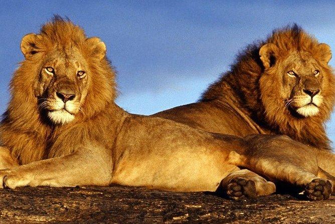 Pilanesberg Game Reserve and Sun City Entertainment Tour
