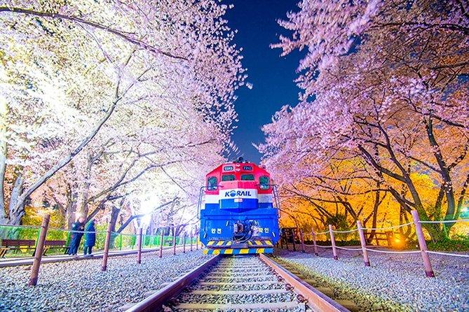 Private Jinhae Cherry Blossom Festival Tour