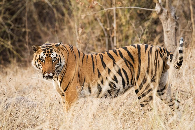 Wildlife Tour of India In Bandhavgarh & Kanha