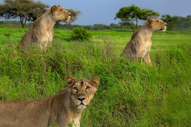 Temple & Lion Safari Tour from Rajkot in Gujarat