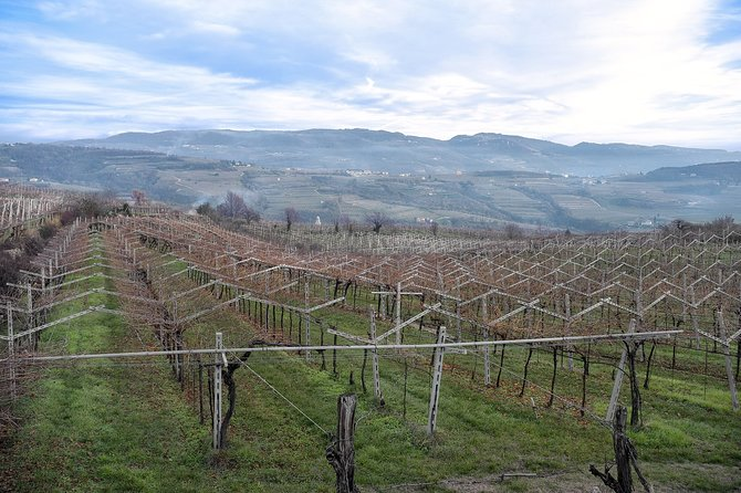 Private Tour to Valpolicella with Wine Tasting from Verona