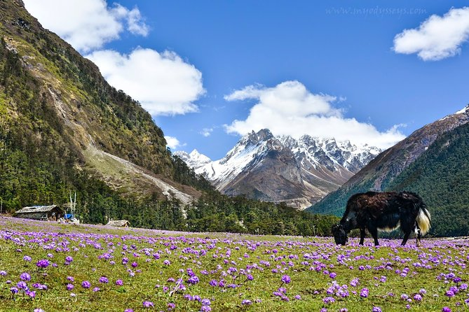Gangtok + Lachung + Lachen + Pelling (08 Nights / 09 Days)
