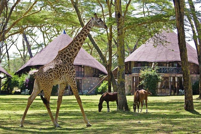 8-Days Best Family Fun Private Safari Experience