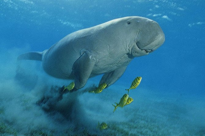 Abu Dabbab over day- Snorkel with Turtles & Dugong From Hurghada