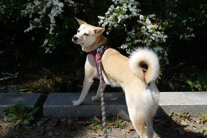Flower hunting in Kyoto with Mori the Doggo (Online experience)