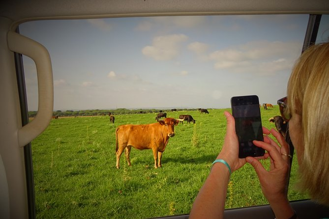 cattle ranch tours bulls and horses, Spain