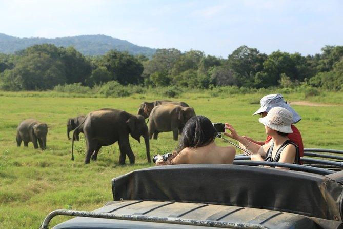 Day Tour To Kaudulla National Park