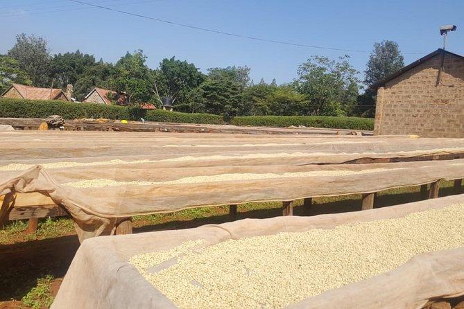 Coffee Farming Tour in kenya