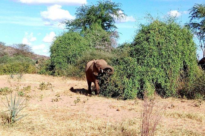 Tarangire National Park Full day Tour