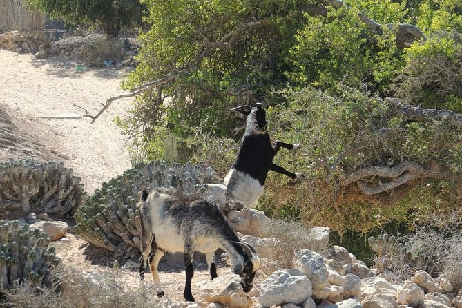 """Half day trip to """"Souss National Park"""""""