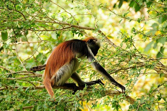 Jozani Forest National Park and Village Tour in Zanzibar
