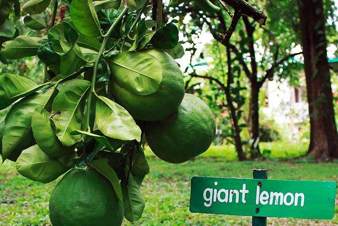 Sun Valley Botanical Plantation Private Tour