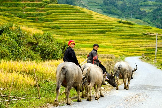 Sapa Villages trekking 2 Days Tour from Hanoi: Limousine bus & 3 star hotels