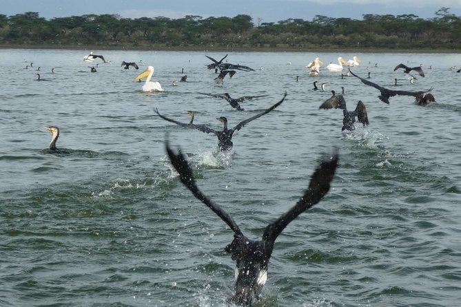2 Days Safaris to Lake Naivasha