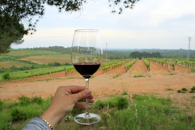 Barcelona Countryside Full-Day Food Tour with Wine Tastings